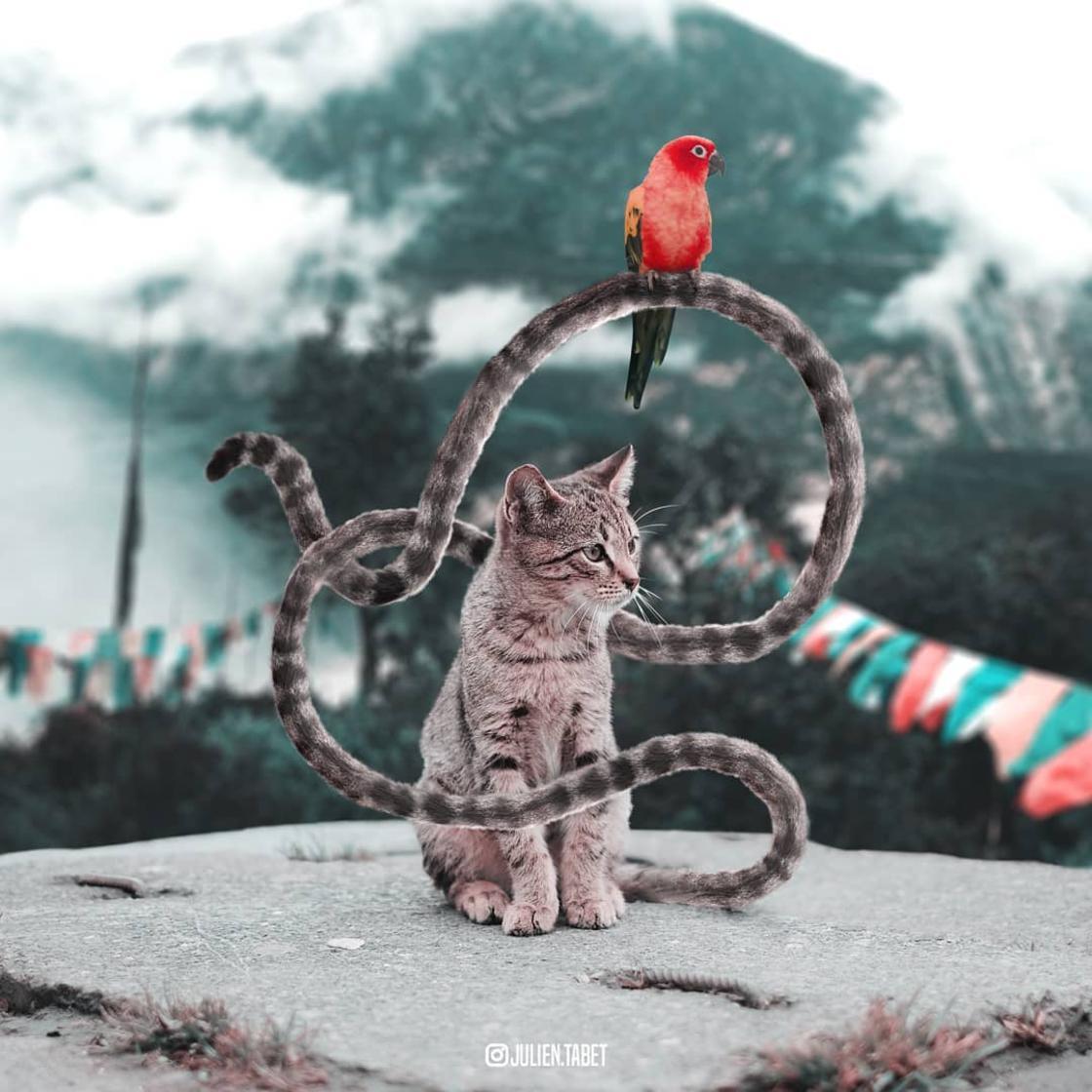 animaux-fantastiques-julien-tabet-17.jpg