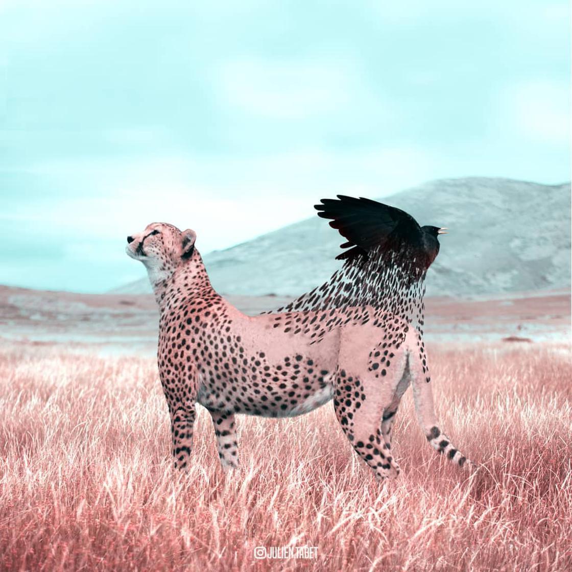 animaux-fantastiques-julien-tabet-18.jpg