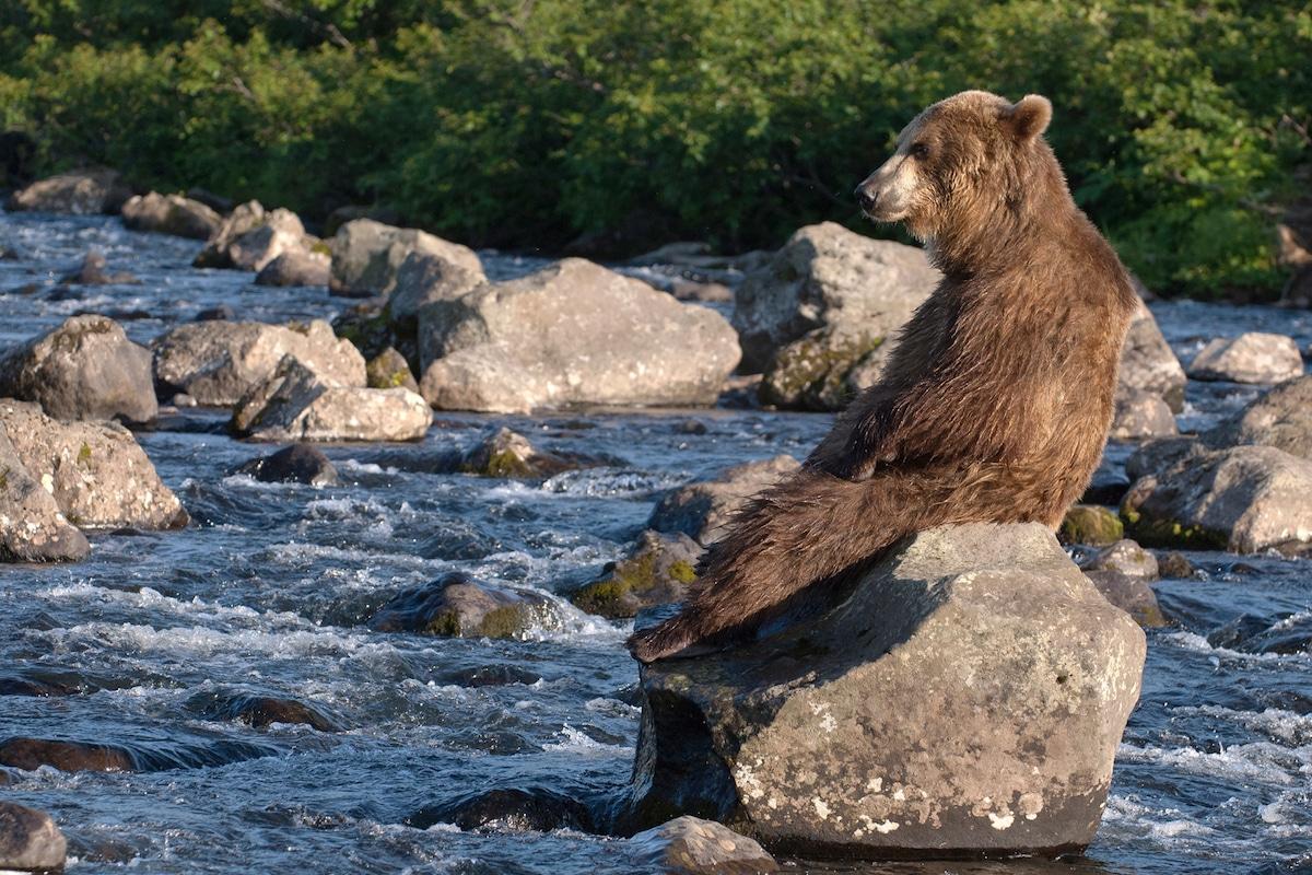 Sergey-Gorshkov-Bear-02149.jpg