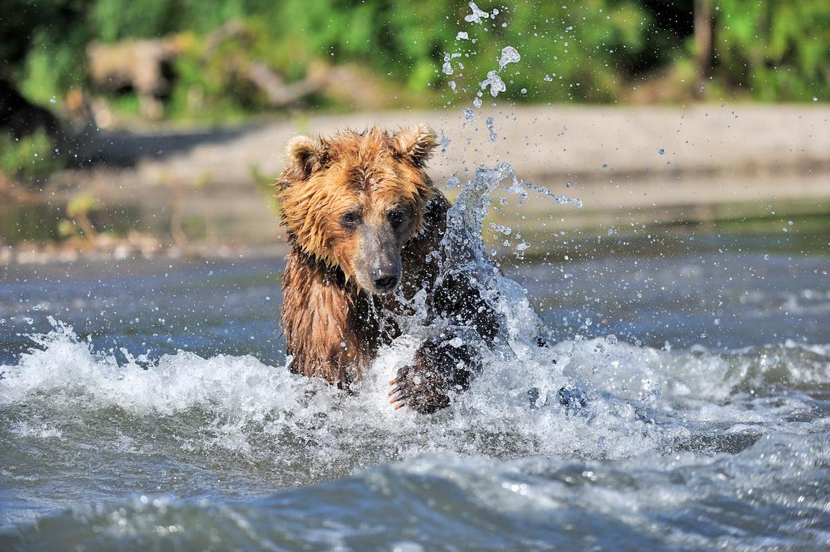 Sergey-Gorshkov-Bear-03043.jpg