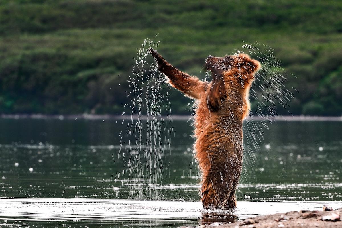 Sergey-Gorshkov-Mammals-Bear.jpg