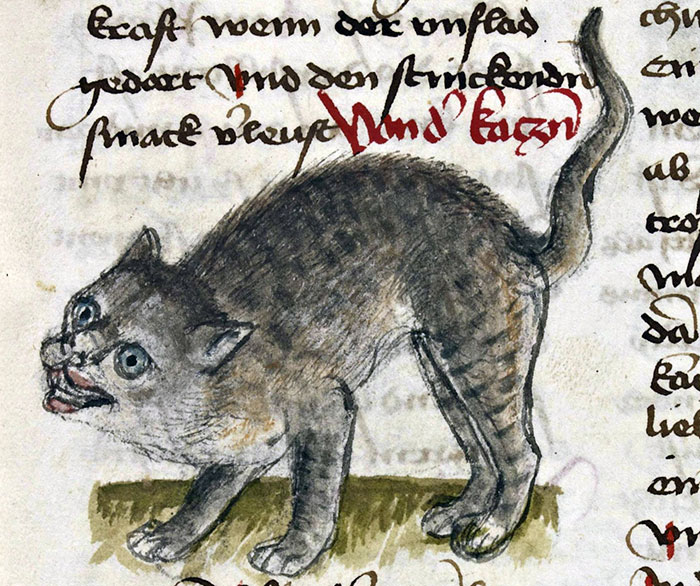 ugly-medieval-cats-art-112-5aafb7efce958__700.jpg