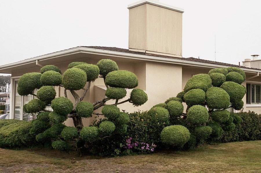 domus-00-california-topiaries.jpg