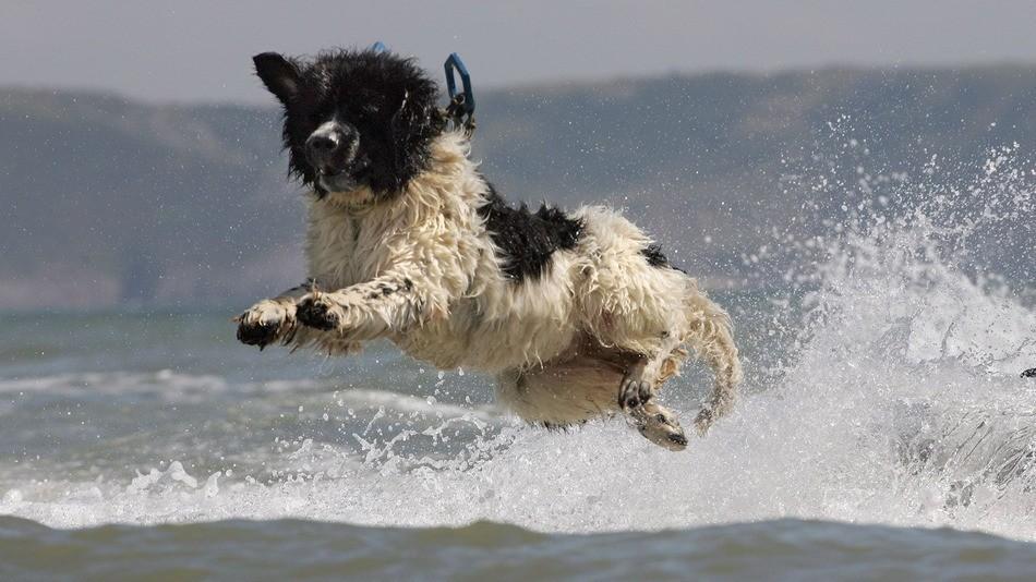 whizz-cachorro.jpg