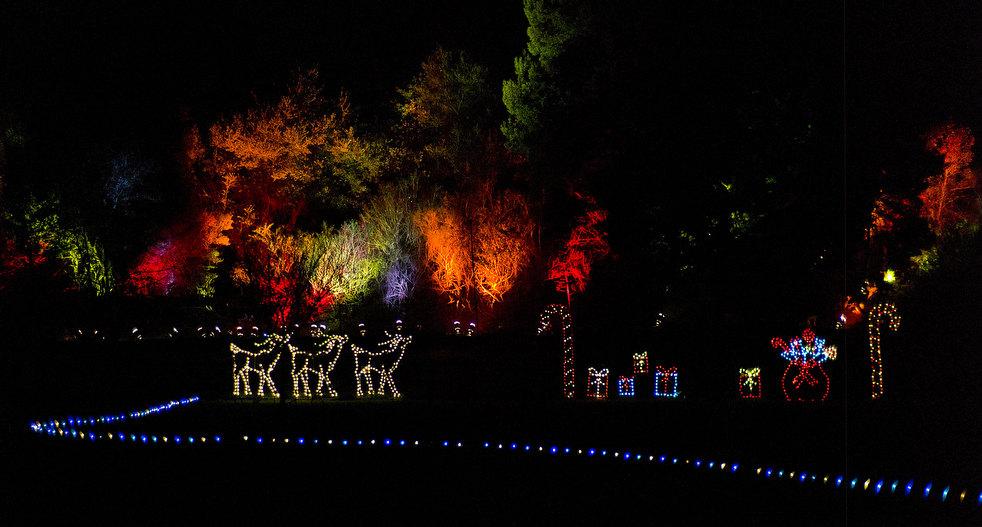 Световое шоу в зоопарке Окленда