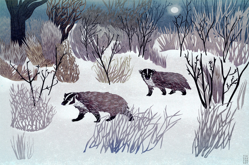 American Badger by Tin Can Forest
