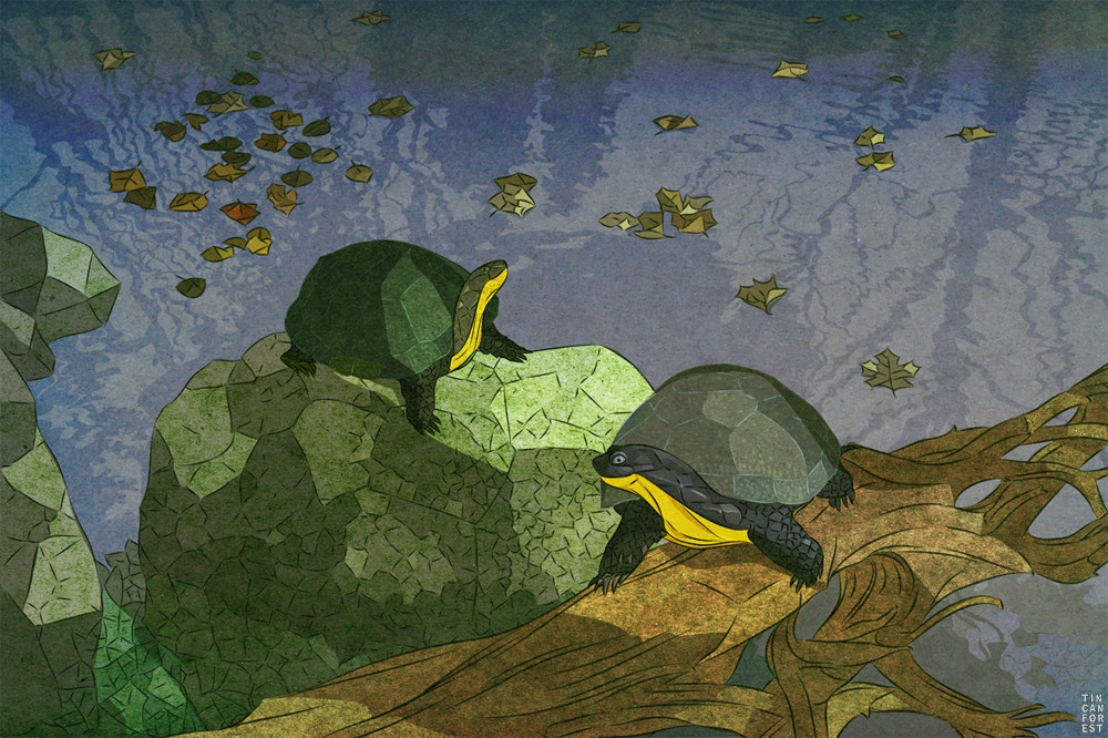 Blandings Turtle  by Tin Can Forest