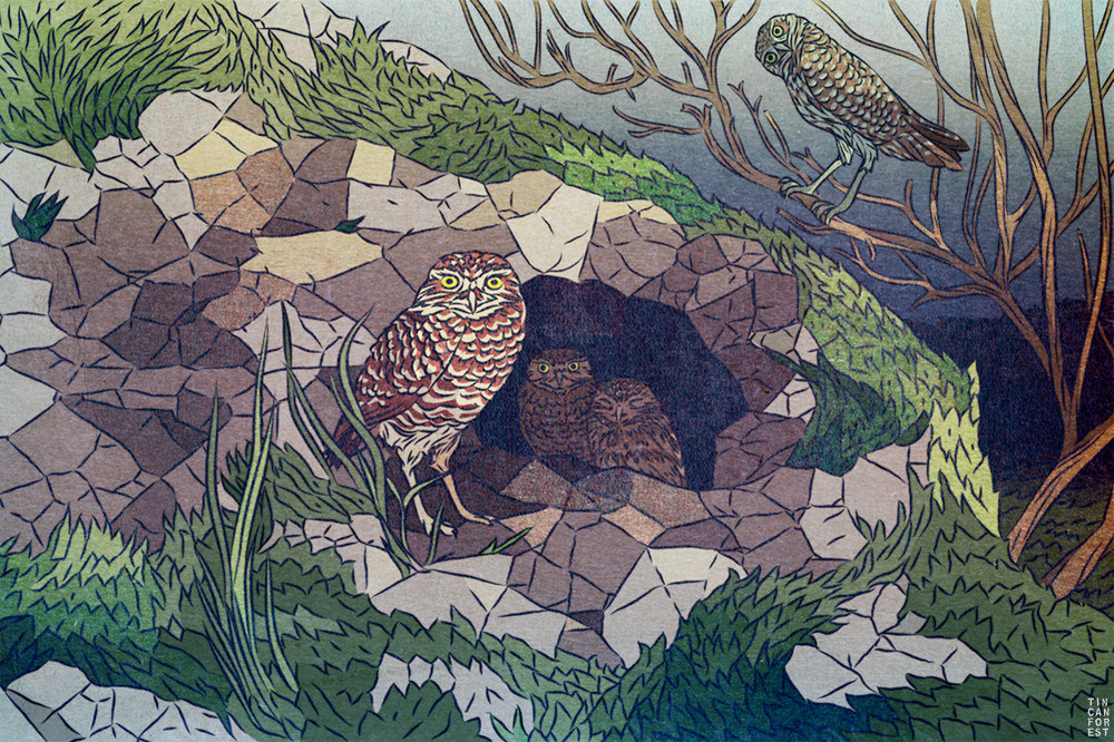 Burrowing Owl by Tin Can Forest