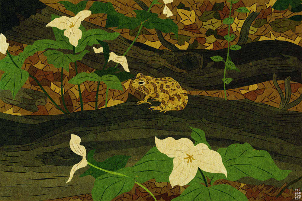 Fowlers Toad by Tin Can Forest