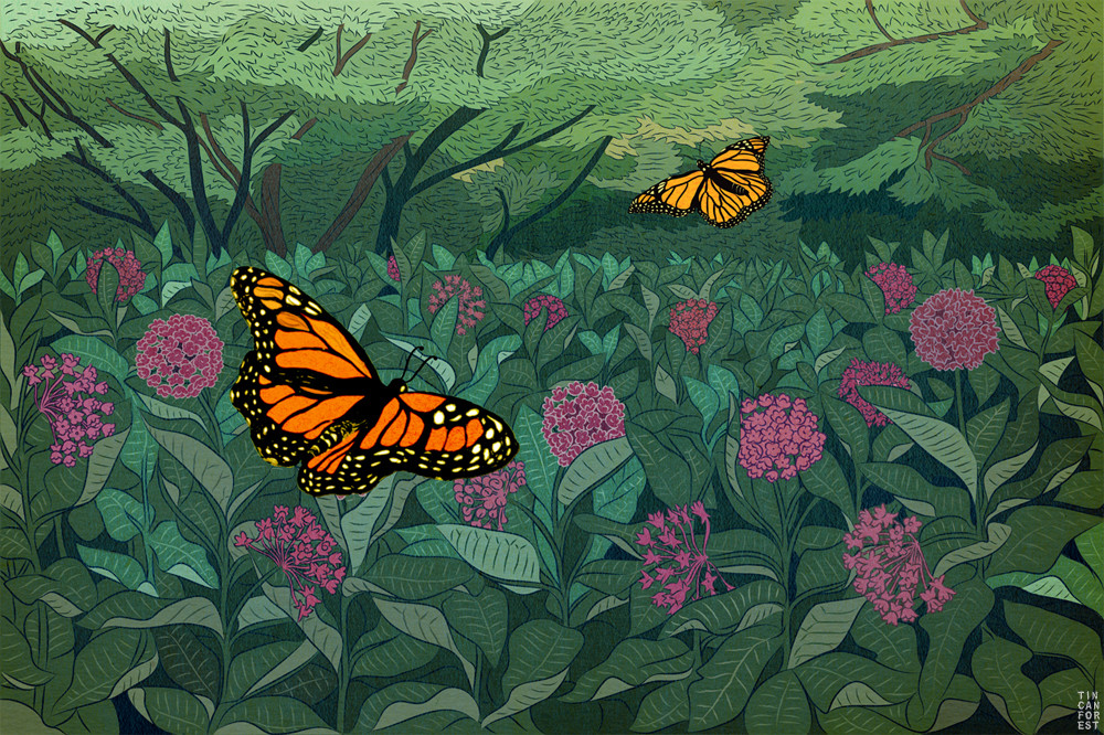 Monarch Butterfly  by Tin Can Forest
