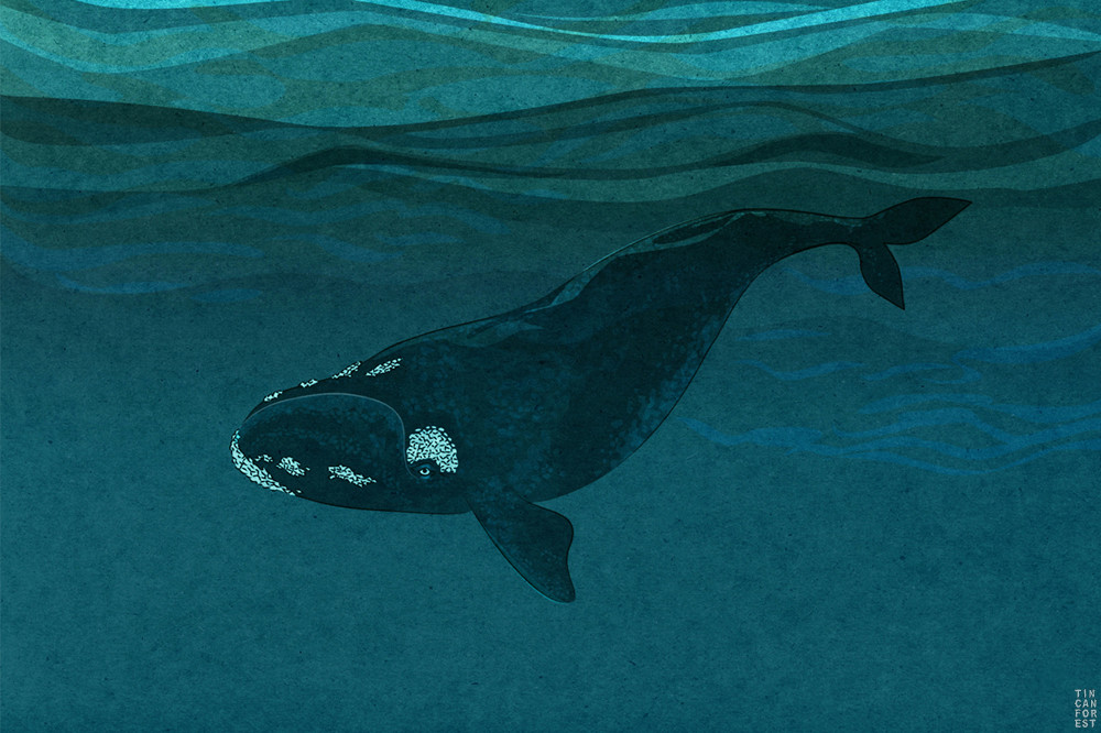 Right Whale by Tin Can Forest