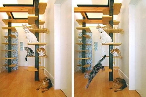 shelf4