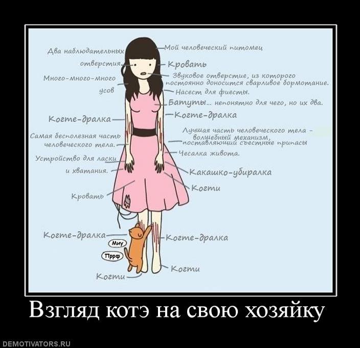 298398_vzglyad-kote-na-svoyu-hozyajku