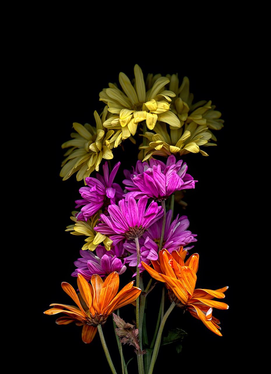 Untitled (Orange Fuchsia Yellow)