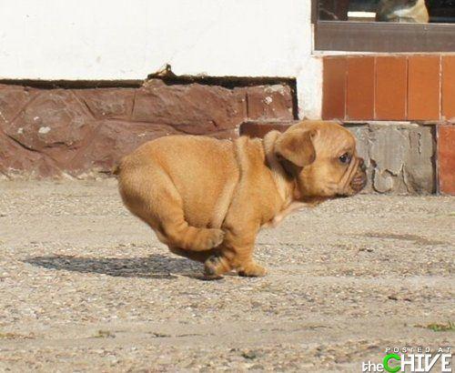 awesome-dog-11
