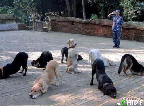 a-awesome-dog-5