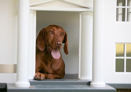 doghouse15