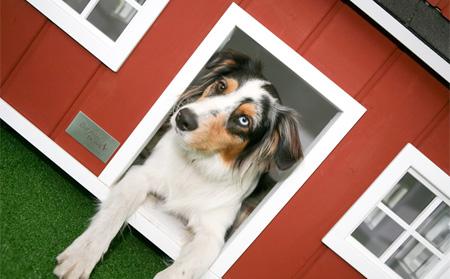 doghouse10