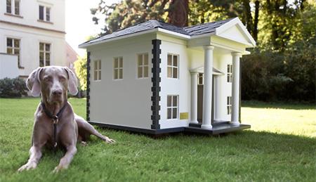 doghouse13