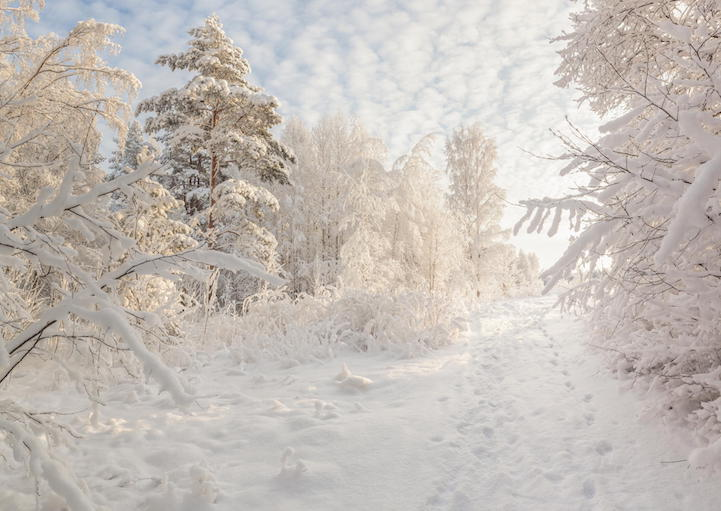 Winter snow-covered wood.