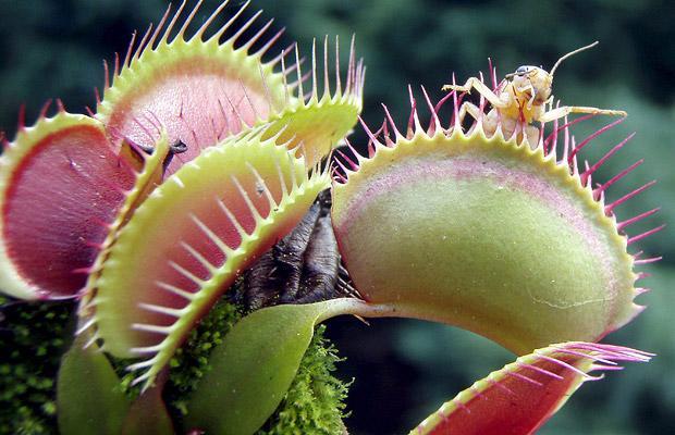 plant-18_1464533i