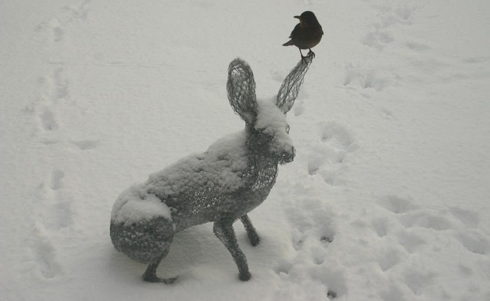 1-chris-moss-rabbit