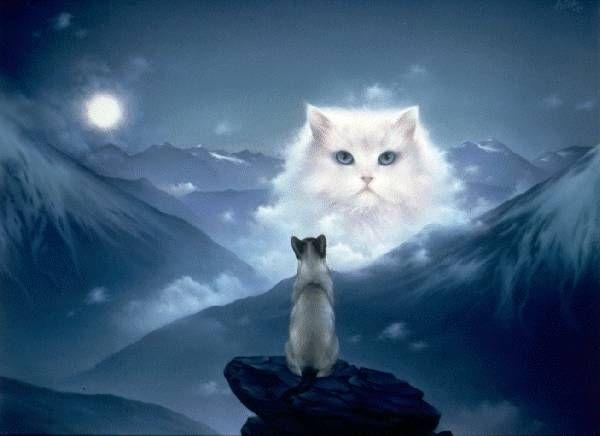 cats_35