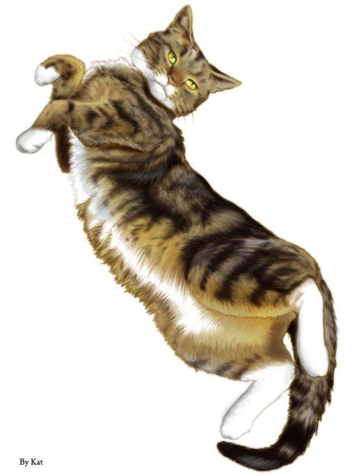 cats_64