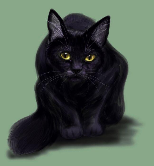 cats_75