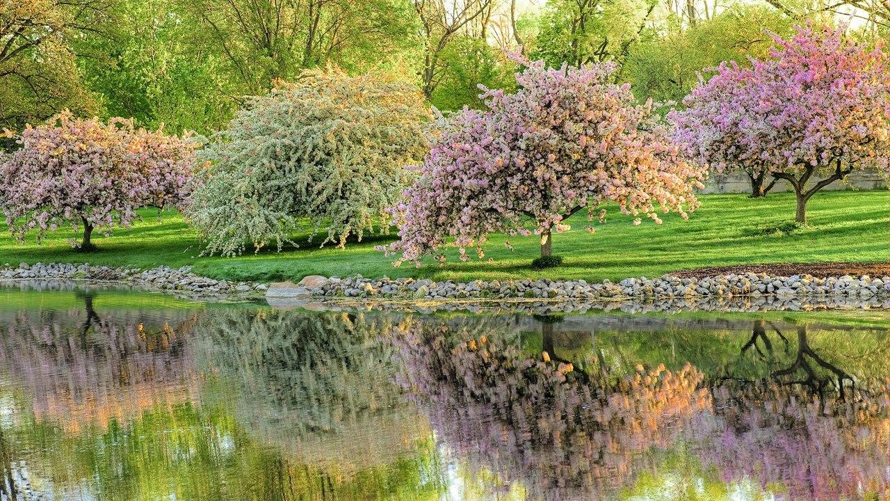 цветущие деревья во дворе  № 532012 бесплатно
