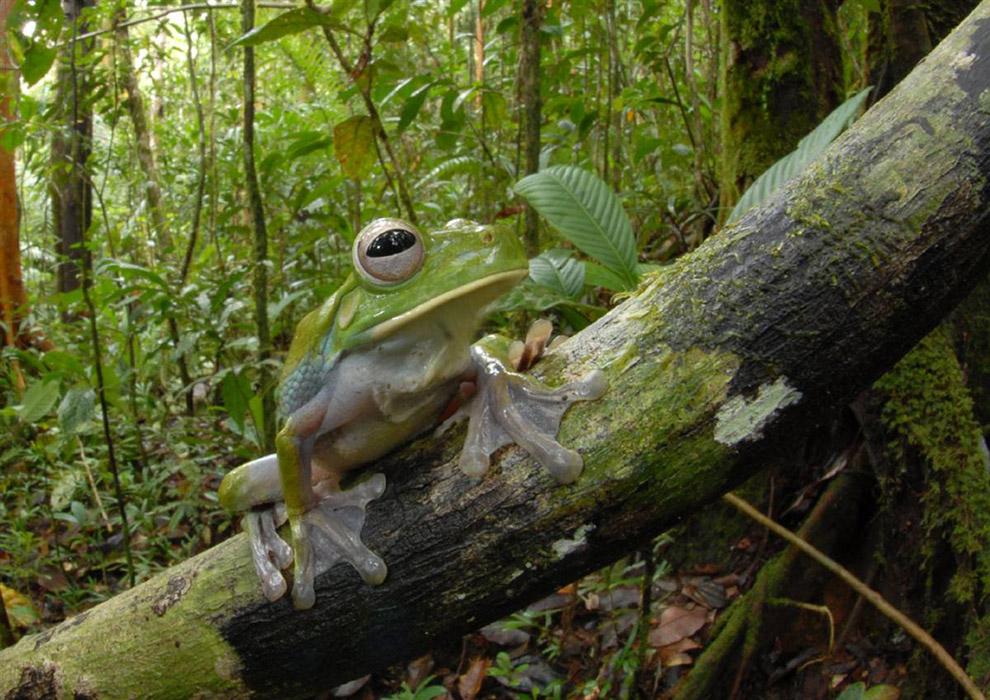 New-Guinea-species12-11