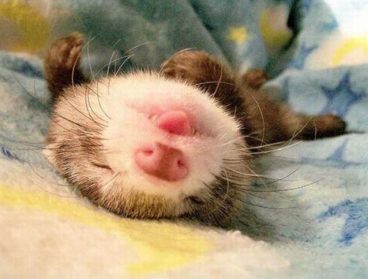 cute_baby_animals_14