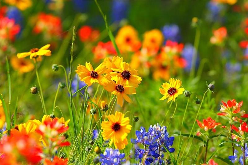 Красивые поляны с цветами фото и