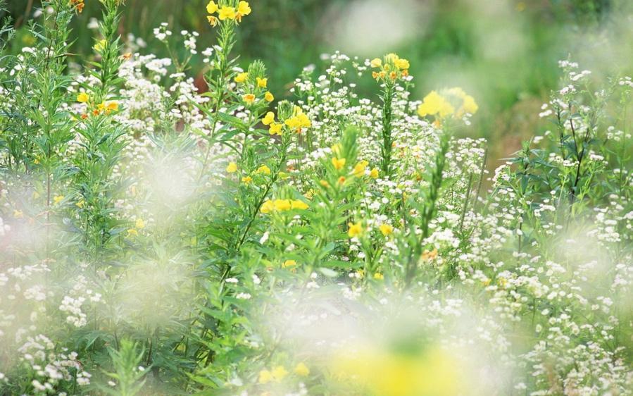 89921967_large_1280_Beautiful_Meadow