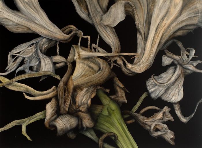 Decaying-amaryllis-75x102cm-web