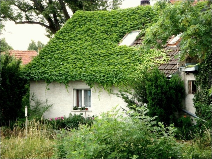 1365538694_house-in-green-010