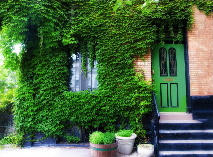 1365538599_house-in-green-005