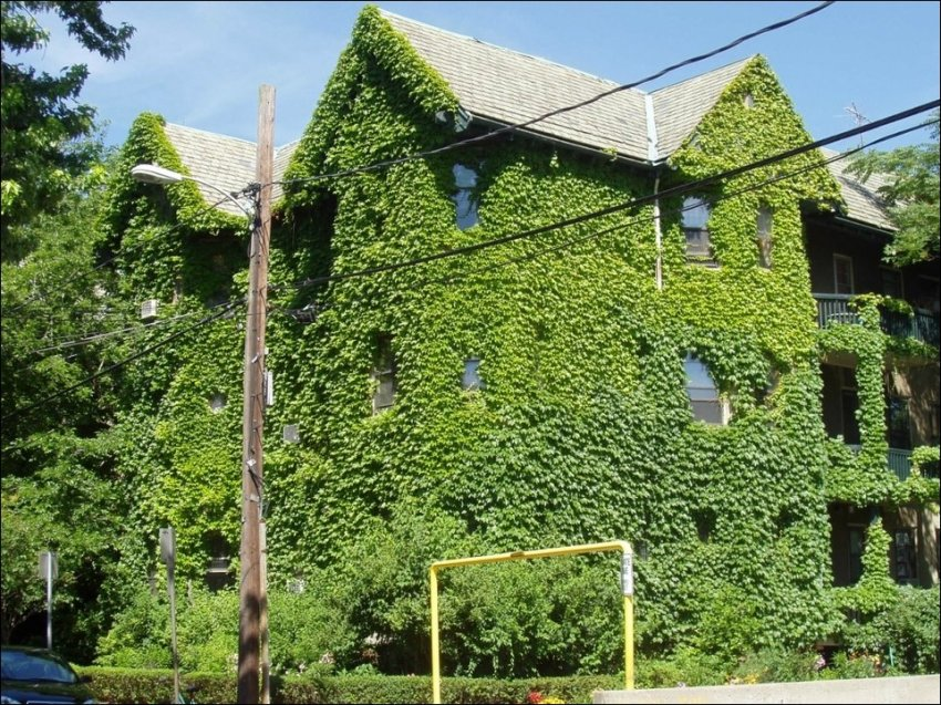 1365538638_house-in-green-003