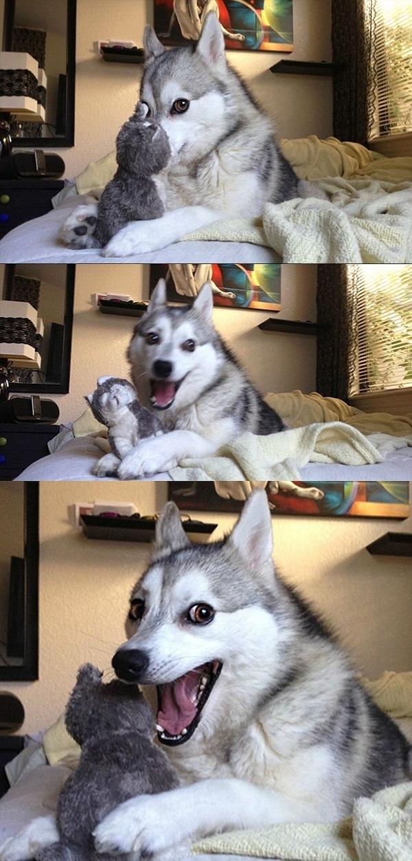 funny-dog-9