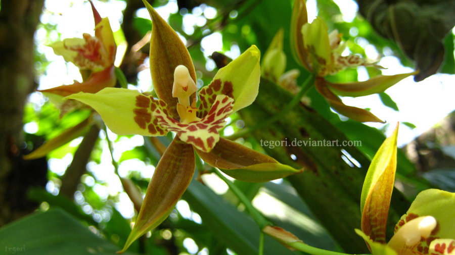 orchid__green_by_tegori-d4jbtby