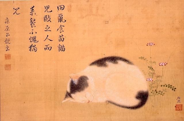 фото японских кошек