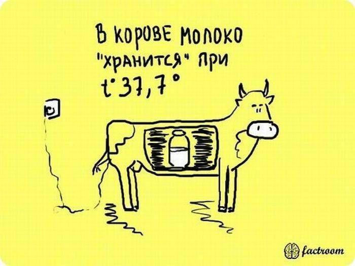 b_700_0_16777215_00_images_post_2013_05_13_zanimatelnye-fakty-v-kartinkakh-25-foto-16