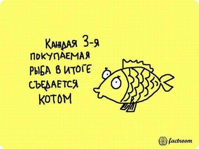 b_700_0_16777215_00_images_post_2013_05_13_zanimatelnye-fakty-v-kartinkakh-25-foto-21