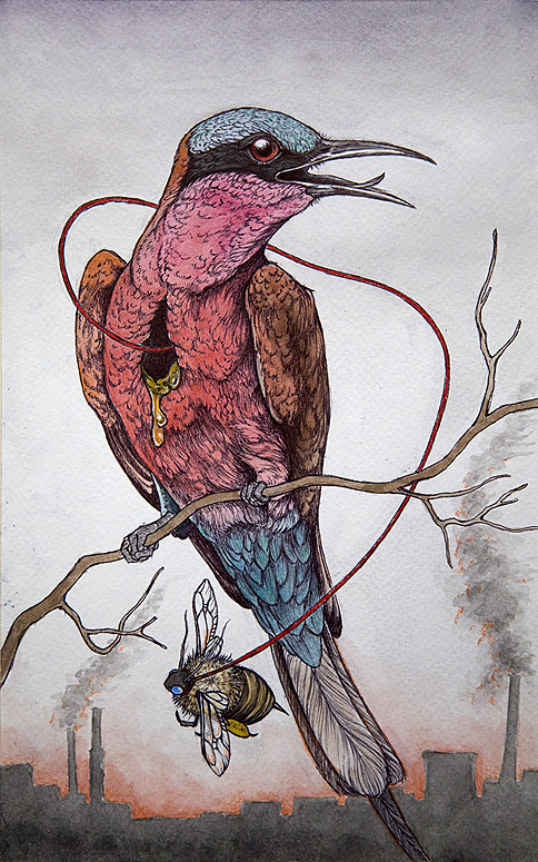 Caitlin-Hackett_the-bee-eater-lowres