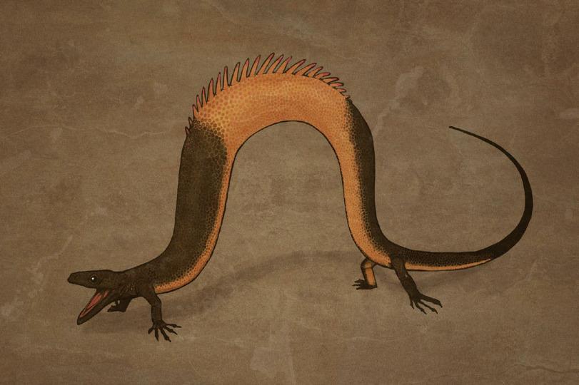 Питон(у родственной ему ящерицы были маленькие ножки)