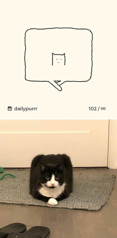 stupid-cat-drawings-dailypurrr-1-5af0179810d7e__605.jpg