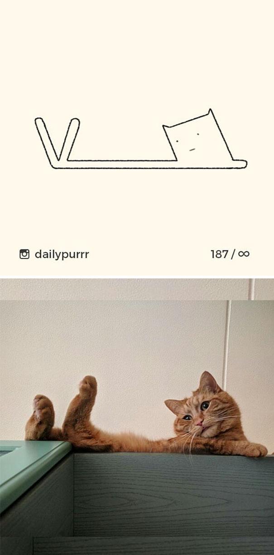 stupid-cat-drawings-dailypurrr-8-5af017a4e3184__605.jpg