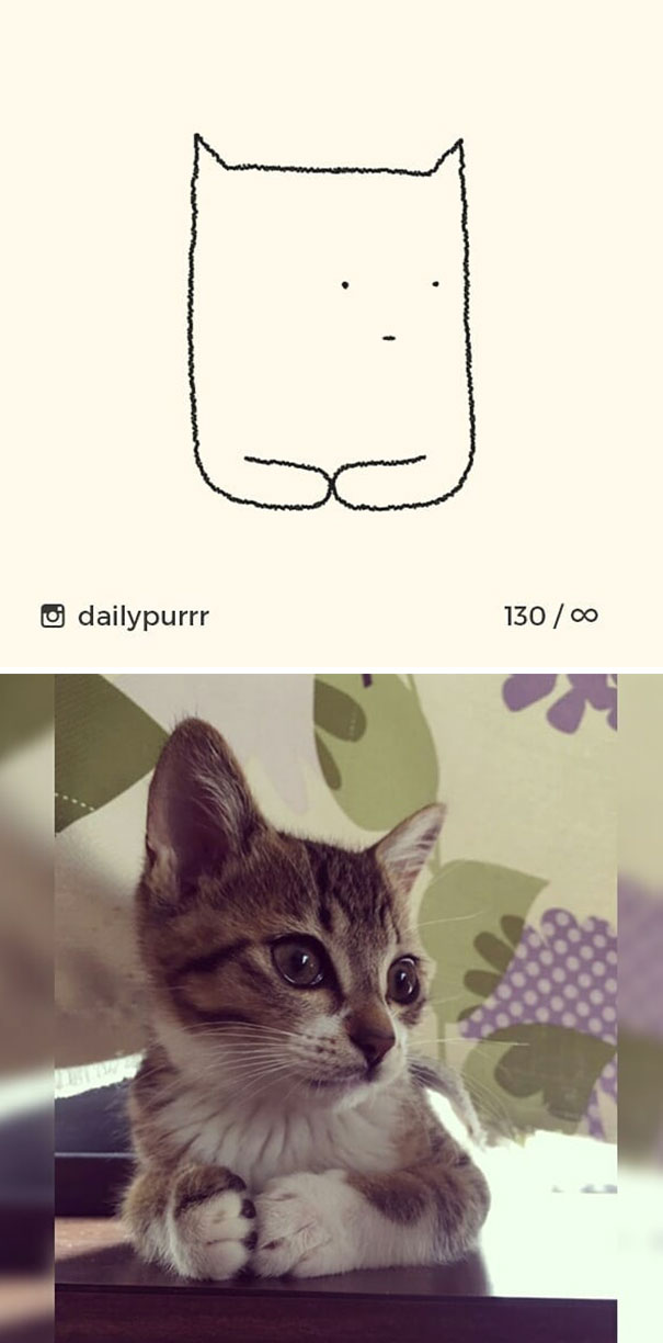 stupid-cat-drawings-dailypurrr-12-5af017ac0c917__605.jpg