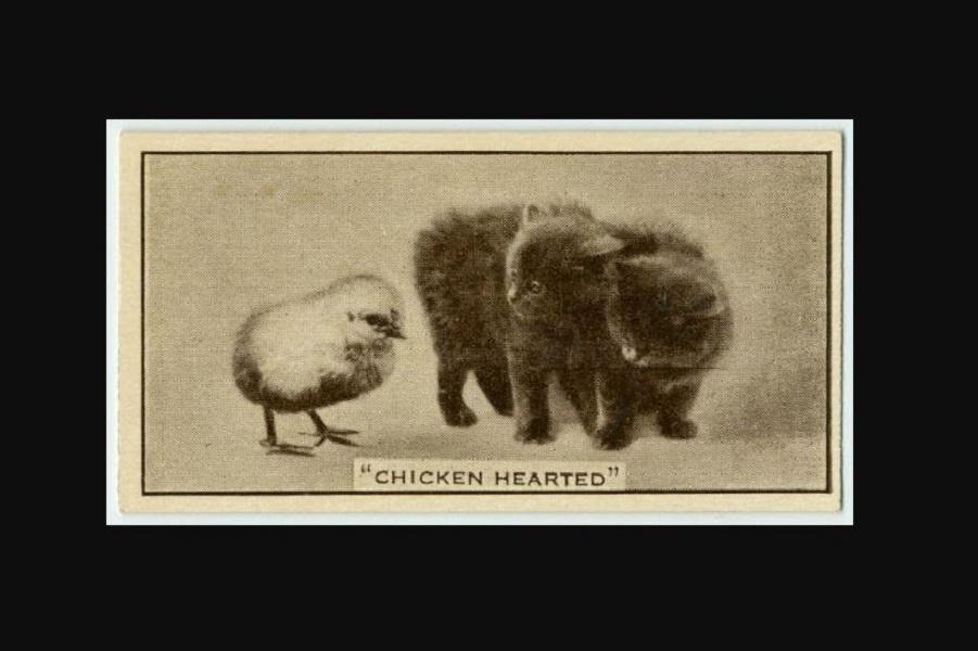 Симпатичные и веселые карточки с животными начала 20-го века