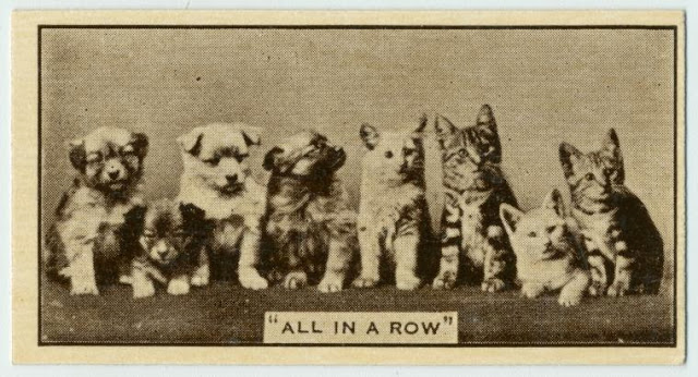 animal-cigarette-cards-27.jpg